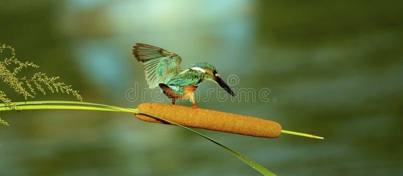 Bird. S filmed in northern China stock photos