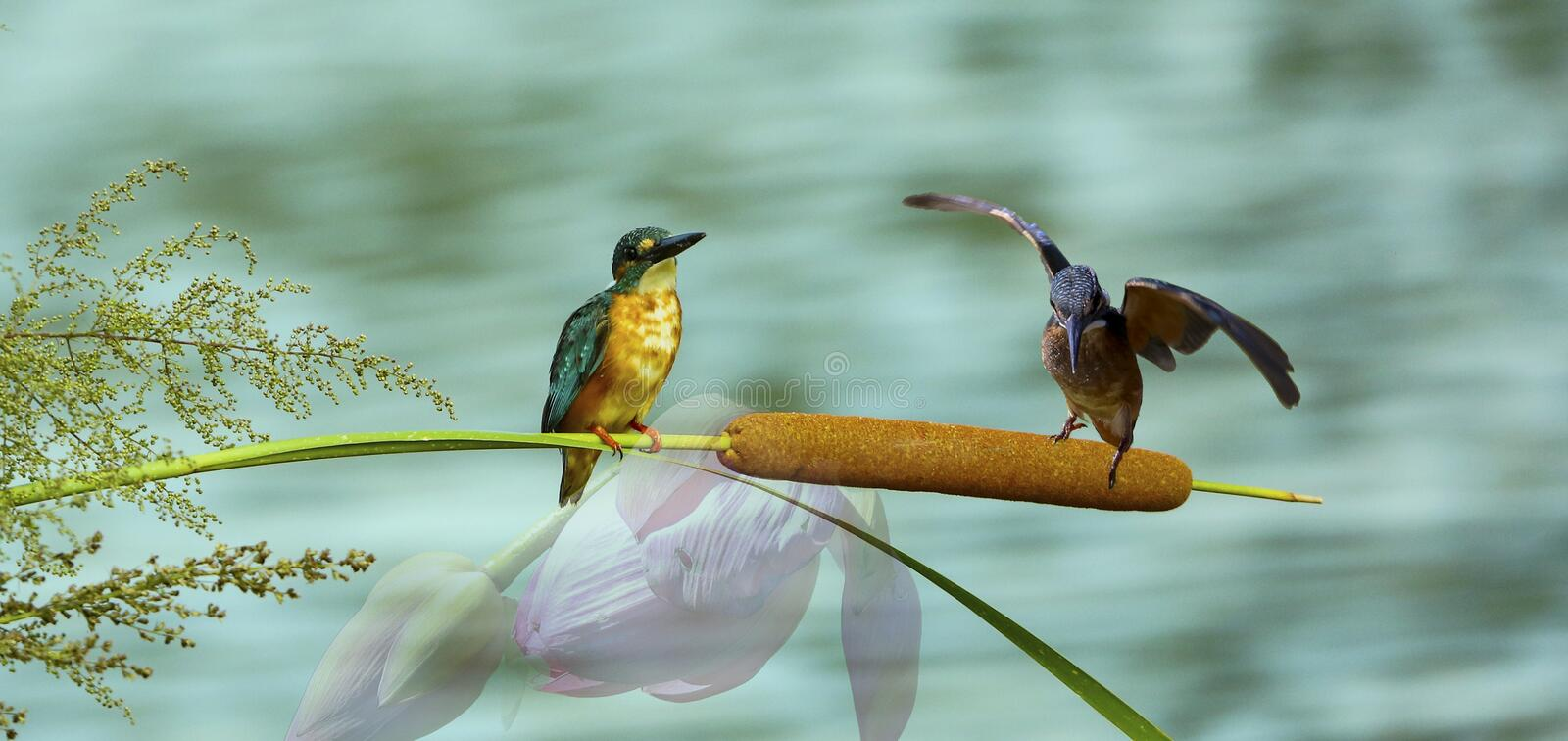 Bird. S filmed in northern China royalty free stock photo