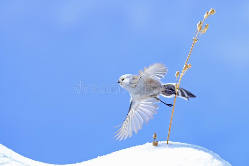 Bird. S filmed in northern China stock images