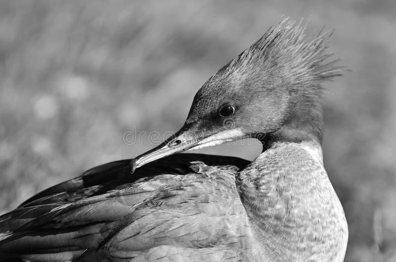 Bird, Black And White, Beak, Fauna stock photo