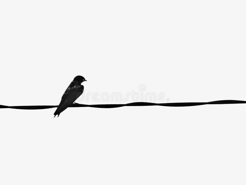 Bird, Black And White, Beak, Feather royalty free stock photos