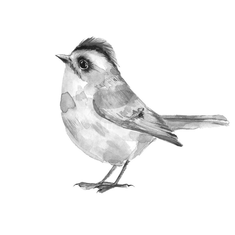 Bird. Black and white watercolor illustration royalty free illustration