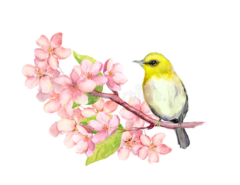 Bird on blossom branch with flowers. Watercolor royalty free illustration