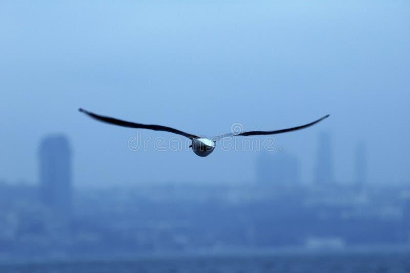 Bird in blue. Bird flying in blue sky evening time stock image