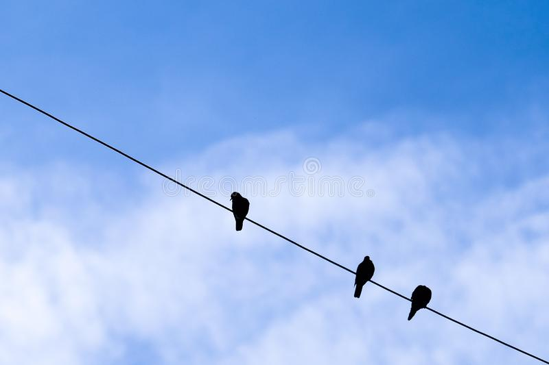 Bird and blue sky background stock image