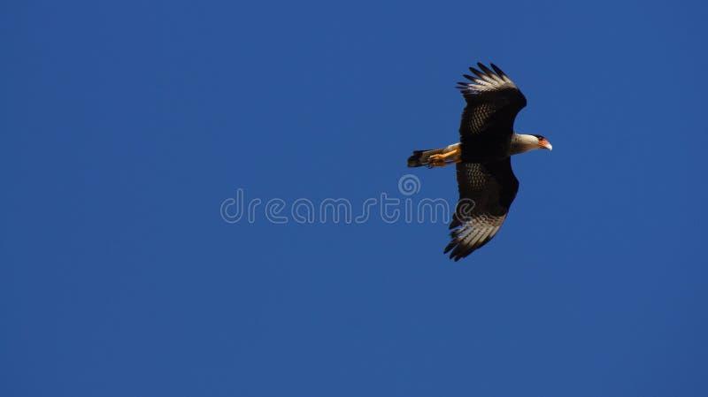 Bird on the blue sky stock photo
