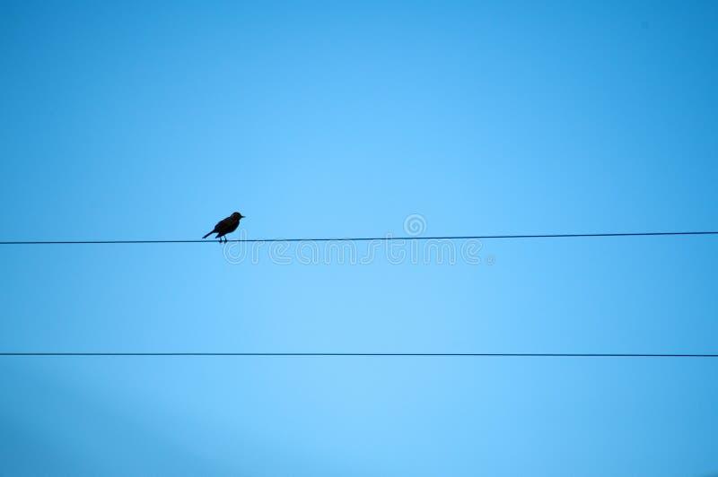 Bird in blue. Bird, sun, wares and blue royalty free stock photos