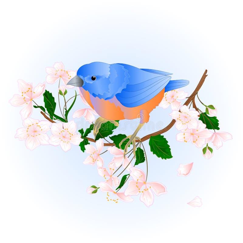Bird Bluebird small thrush songbirdons on an branch wild Cherry wild Cherry blue spring background vintage vector illustrati. On editable hand draw royalty free illustration
