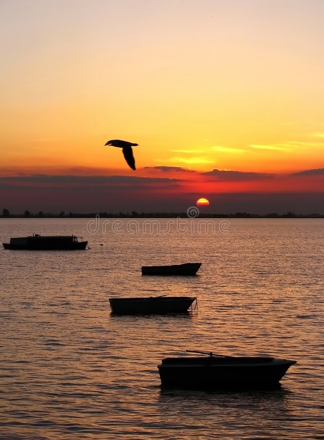 Bird and boats at sunset stock photo