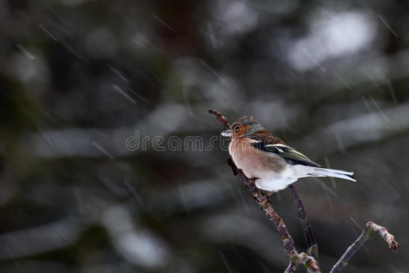 Download Bird on branch stock image. Image of side, closeup, sprig - 12501297
