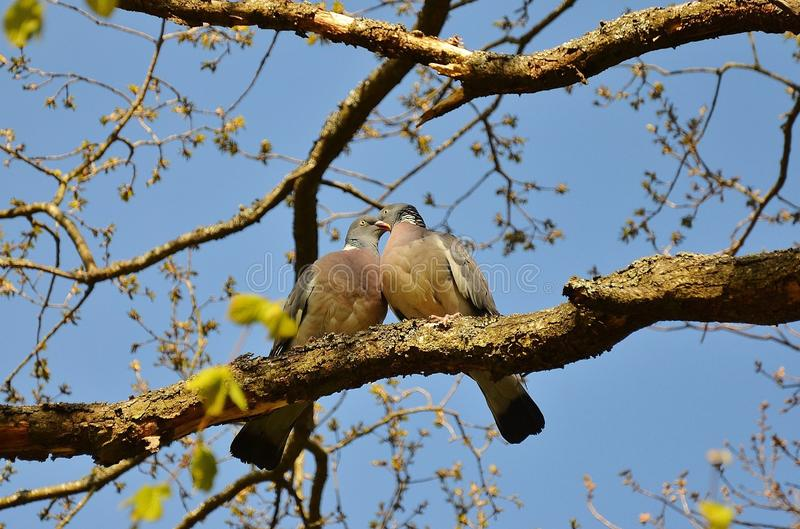 Bird, Branch, Fauna, Tree stock photography