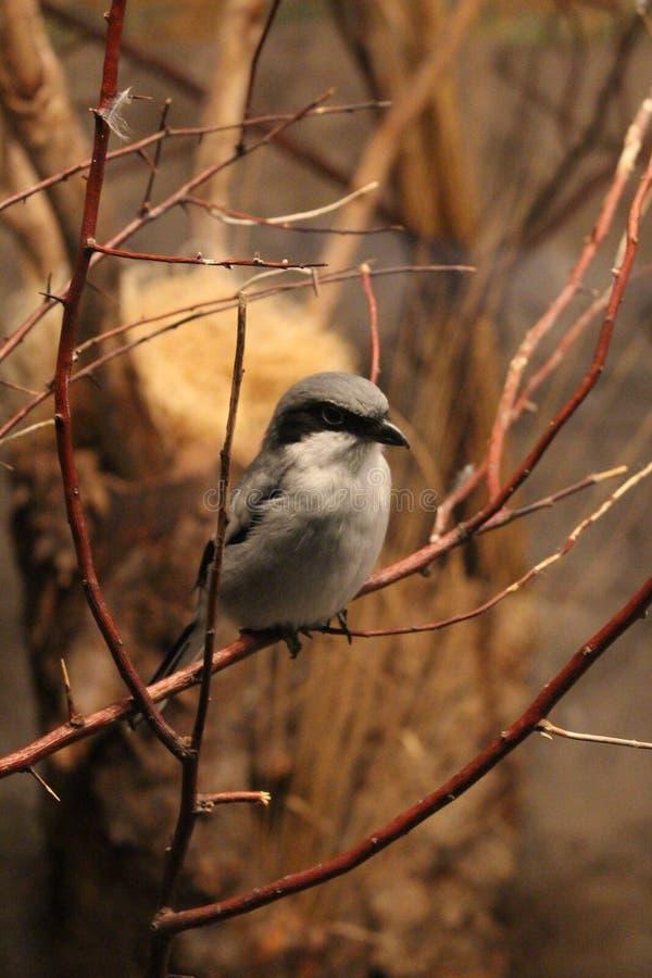 Bird on branch royalty free stock image