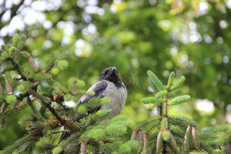 Bird on the branch royalty free stock images