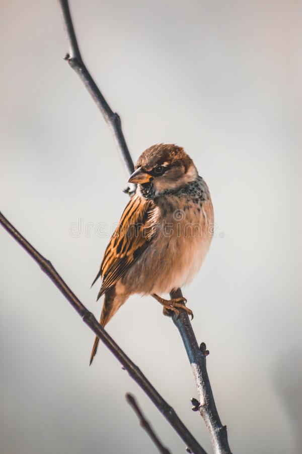 Bird on a branch with soft colors. A bird sitting gently on a thin branch with beautiful orange feathers royalty free stock images