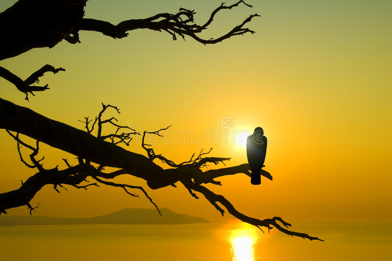 Bird on branch on sunset stock photos