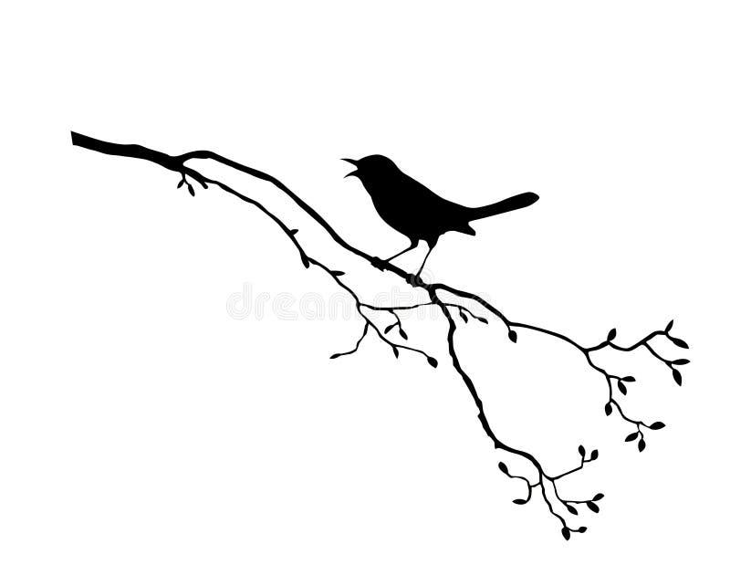 Bird on branch tree. Vector silhouette of the bird on branch tree