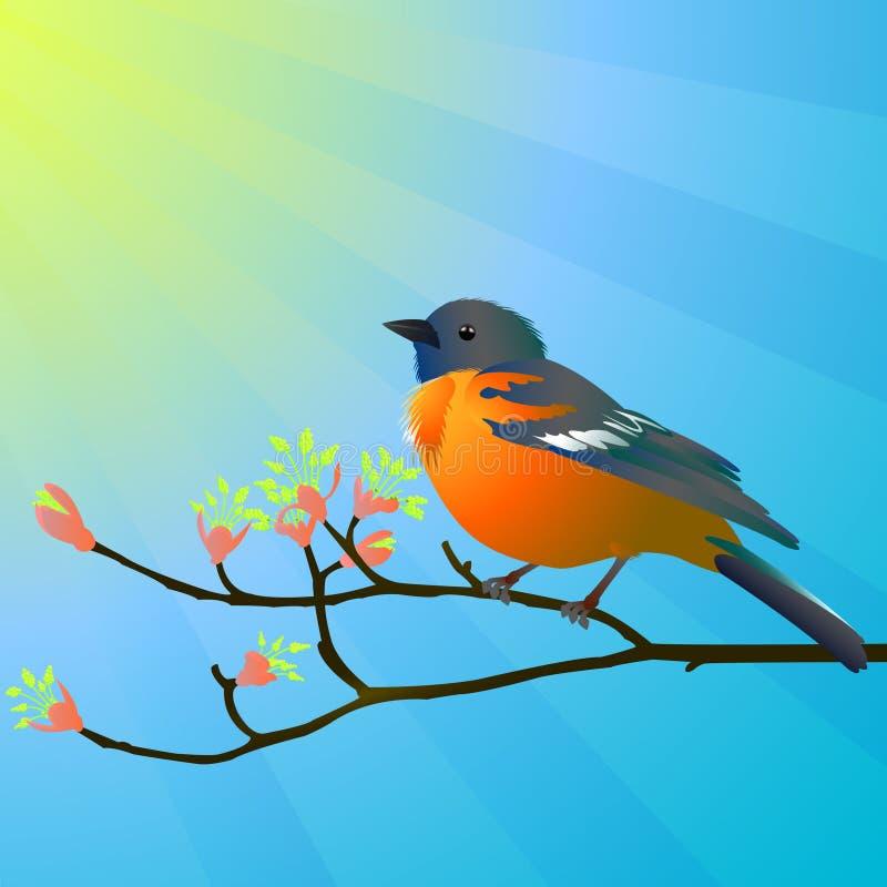 Bird on a branch. Vector illustration of bird on a branch royalty free illustration