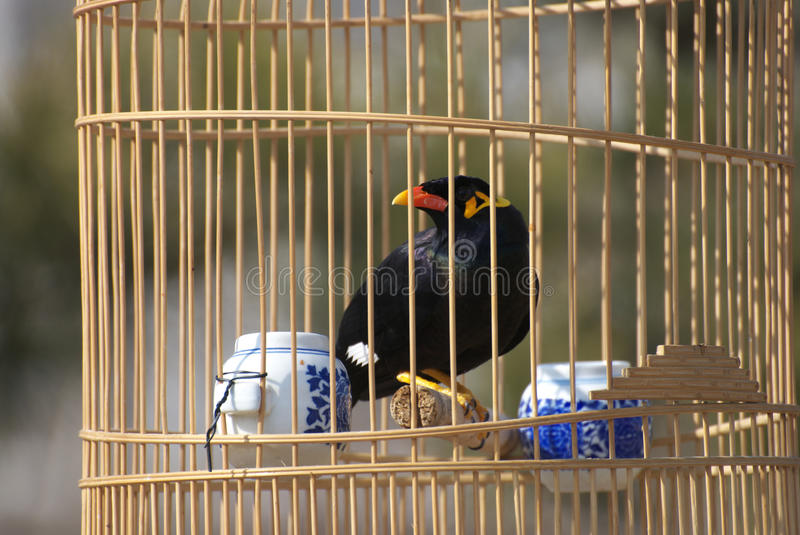 Bird in cage stock image