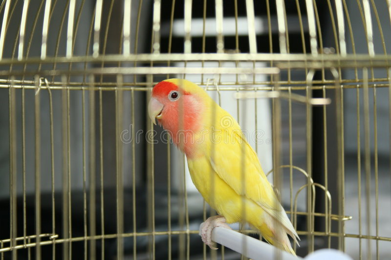 Bird in a cage stock photography