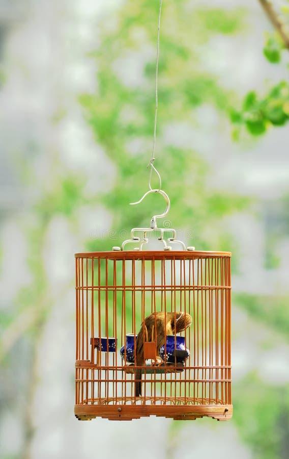 Bird in cage royalty free stock photos