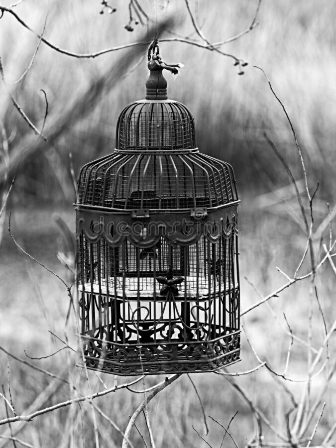 Free Bird Cage By A Pond In The Woods B&W Stock Photo - 197333370