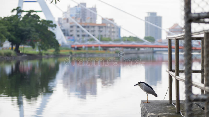 Bird,canal and bridge. Bird stay in front of bridge royalty free stock images
