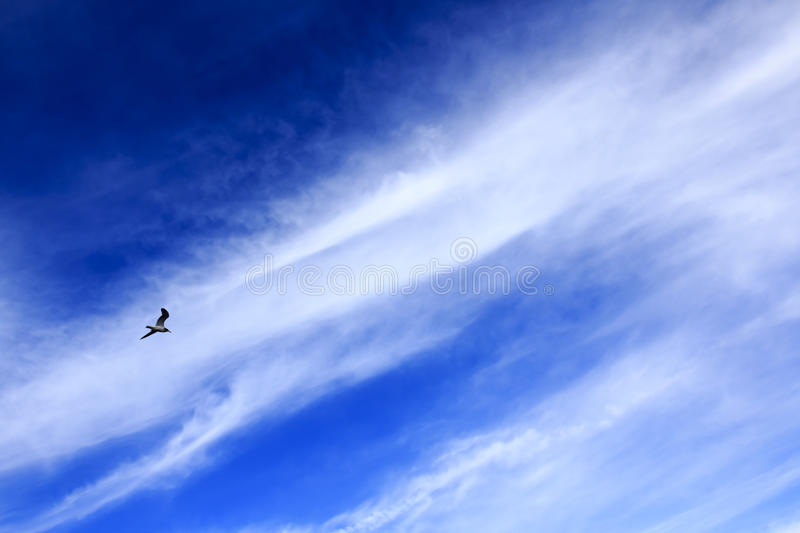 Bird with clear blue sky. This image was taken near a shoreline spot of Southern California during the Christmas week royalty free stock photography