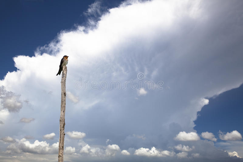 Download Bird with cloud stock image. Image of tropic, cloud, background - 15236191