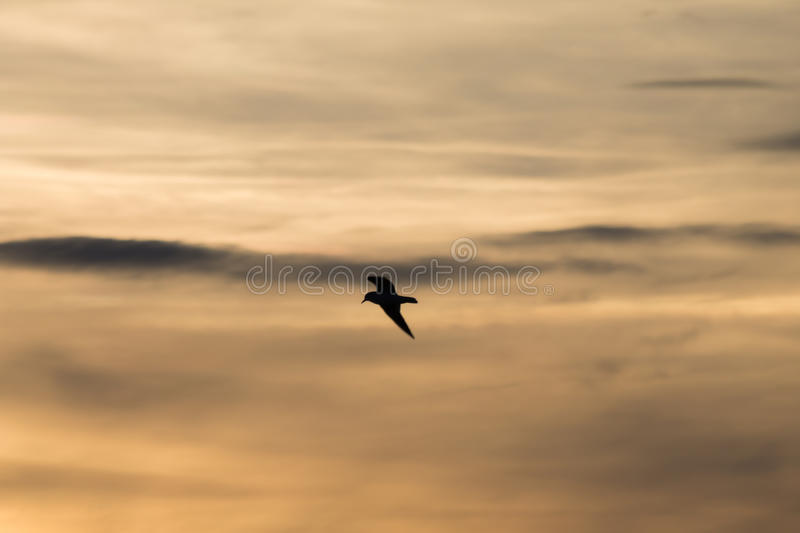 Bird and clouds stock photography