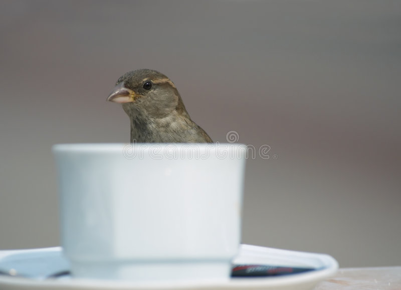 Bird and coffee. Bird and a cup of coffee stock photography