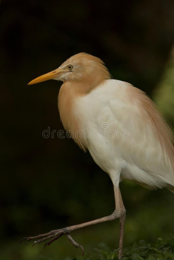 My Style. Bird collection at Taman Mini Indonesia Indah (TMII stock photo