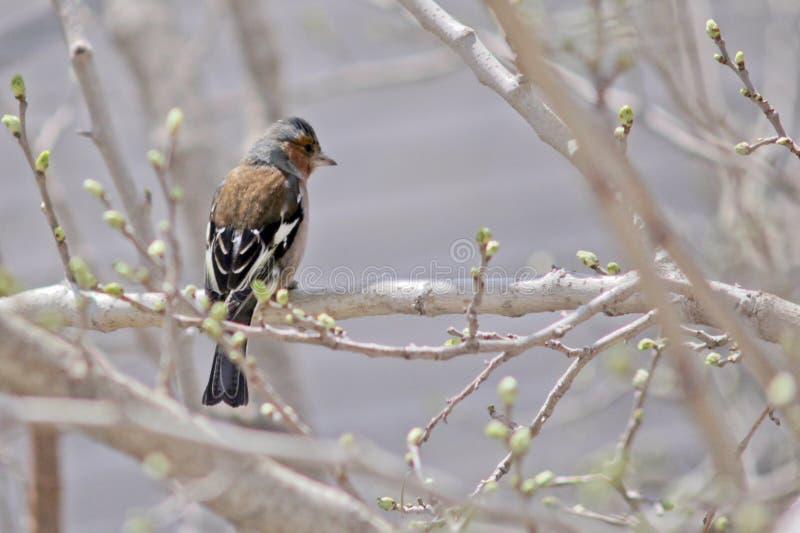 Bird, color, spring, tree stock photos