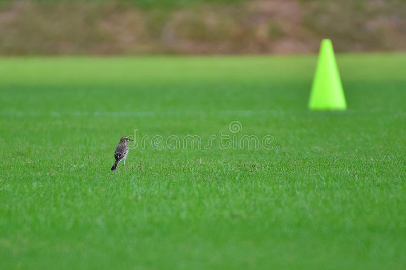 The Bird and The Cone. royalty free stock photos