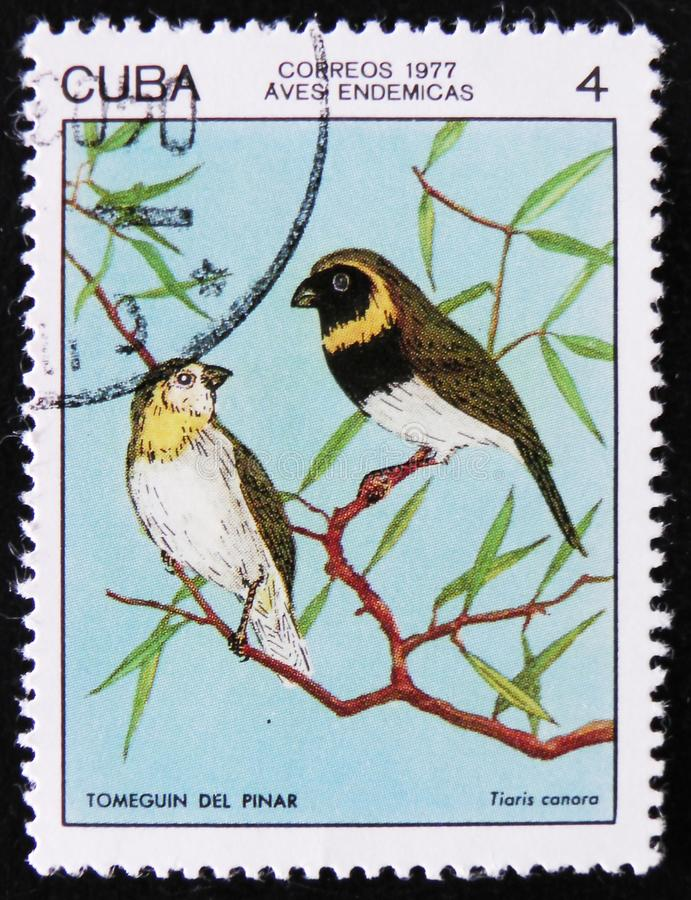Bird Cuban Grassquit - Tiaris canora, stamp is from the series, circa 1977. MOSCOW, RUSSIA - APRIL 2, 2017: A post stamp printed in Cuba shows the Bird Cuban royalty free stock photography