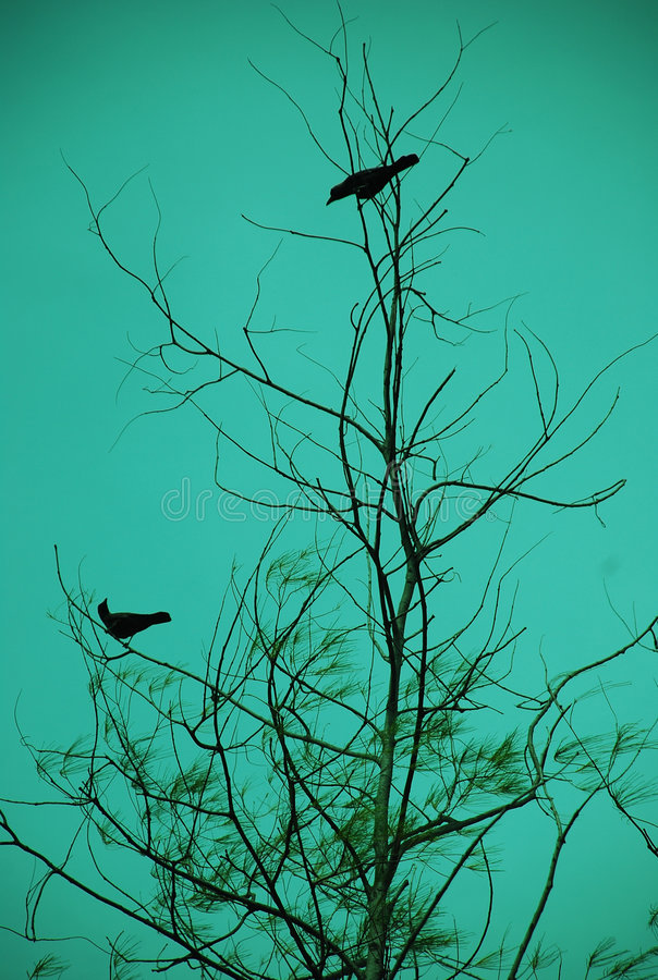 Download Bird Dating stock image. Image of windly, tree, animal - 5863157
