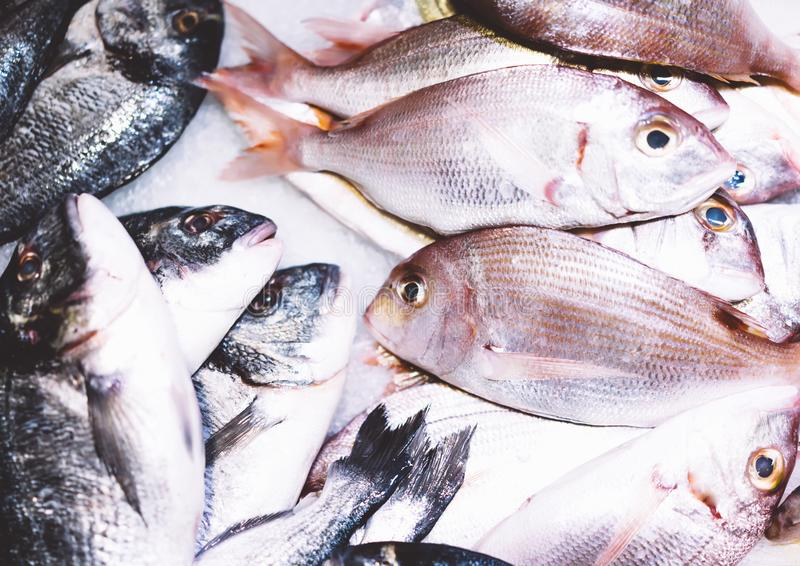 Bird dorado fish on ice background on the market, closup of fresh marine products, useful dietary sea food in restaurant, isolated royalty free stock photography