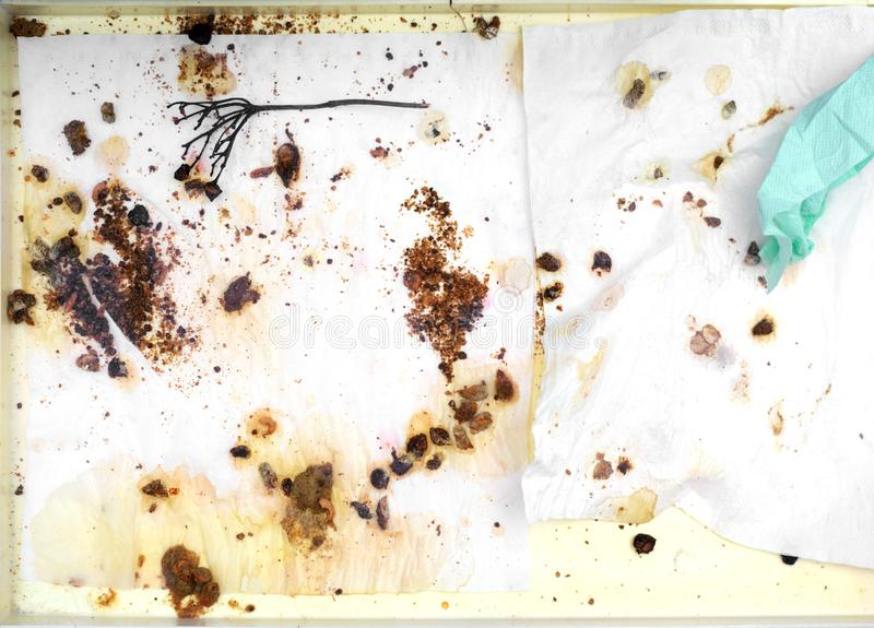 Bird droppings on cage bottom. Untidy bird cage tray covered with tissues and droppings spread out on it, above view stock image
