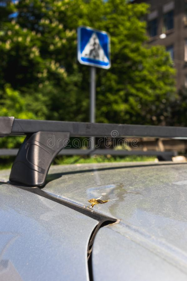 Bird droppings on the car. Bad parking concept.  royalty free stock photography