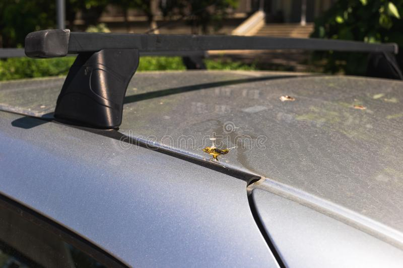 Bird droppings on the car. Bad parking concept.  stock image