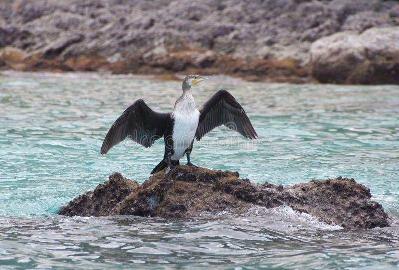Bird drying wings. Socotra island royalty free stock photo