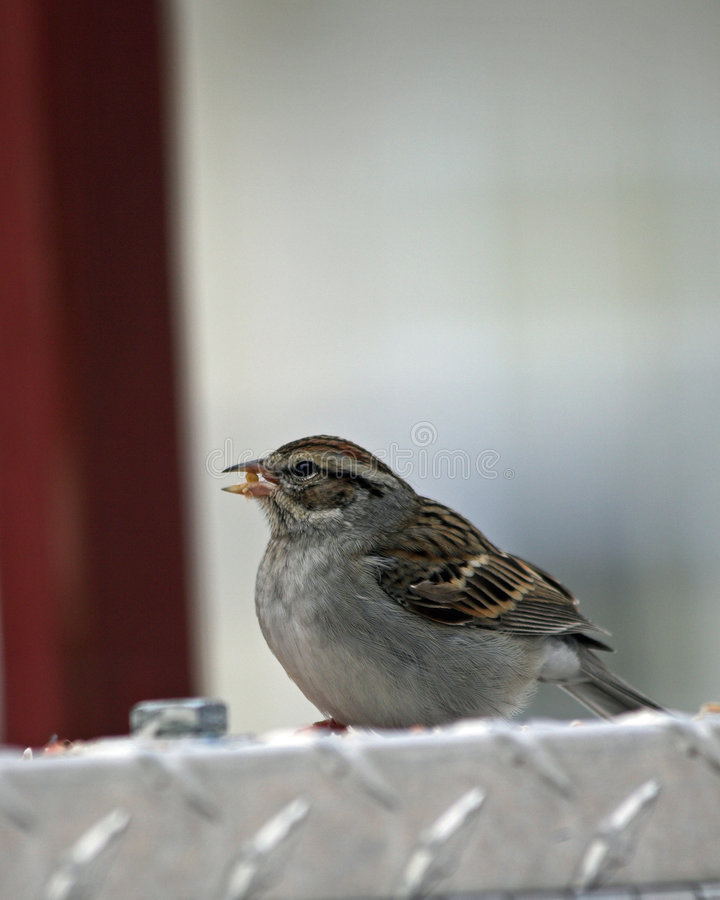 Bird eating stock photography