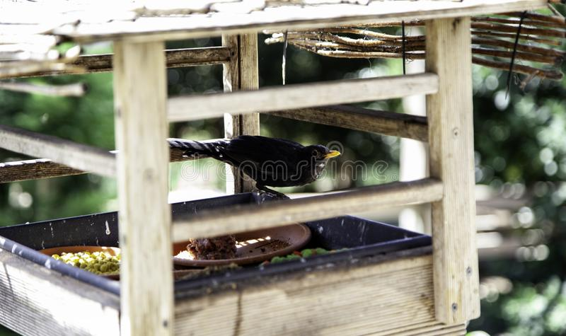 Bird eating in nest. Bird eating kennel seeds, animals in freedom, birds, young, nice, fun, adorable, beak, fauna, down, eyes, gray, female, funny, furry, pretty stock photos
