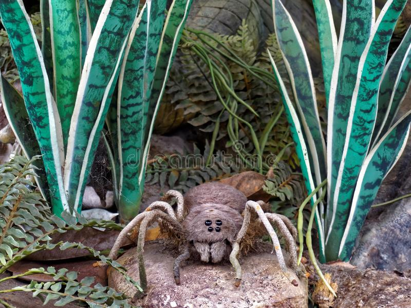 Bird Eating Spider. This model bird eating spider is a model. In nature, The Goliath birdeater (Theraphosa blondi) is a spider belonging to the tarantula family stock images