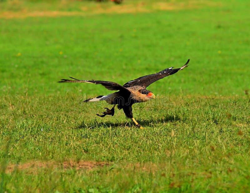 Bird, Ecosystem, Fauna, Wildlife Free Public Domain Cc0 Image