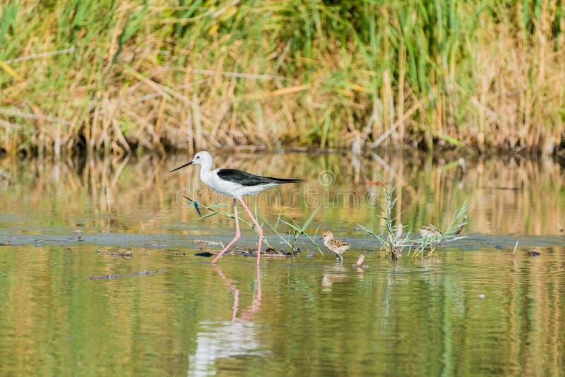 Bird, Ecosystem, Nature Reserve, Fauna Free Public Domain Cc0 Image