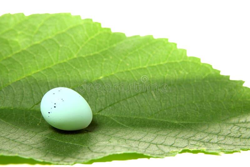 Download Bird Egg On Leaf Stock Image - Image: 14966691
