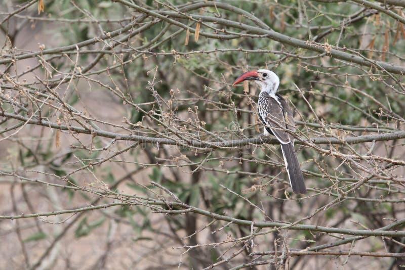 Bird in Ethiopia stock images
