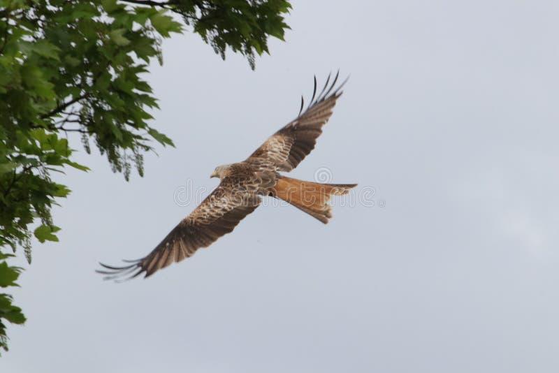 Bird, Fauna, Accipitriformes, Bird Of Prey Free Public Domain Cc0 Image