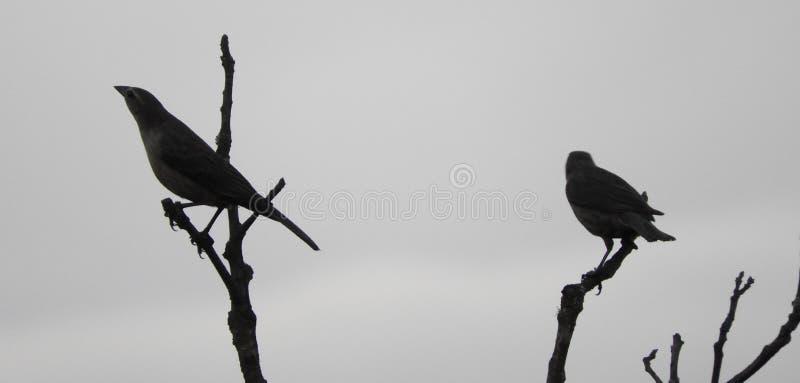 Bird, Fauna, Beak, Black And White stock image