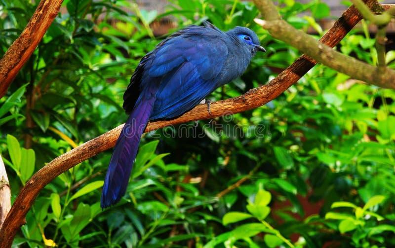 Bird, Fauna, Beak, Branch stock photos